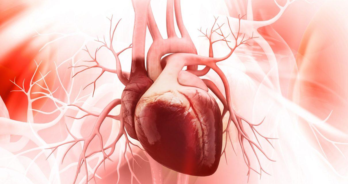 serce ludzkie pompa