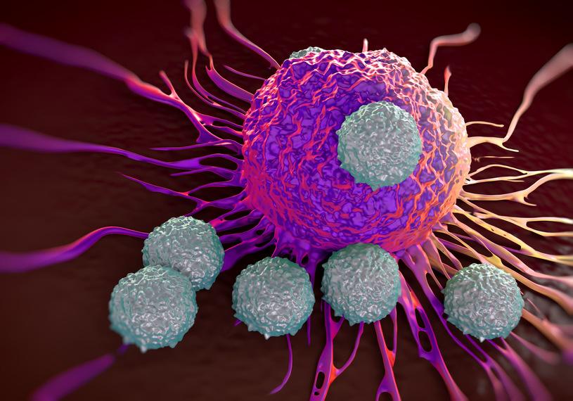 limfocyt