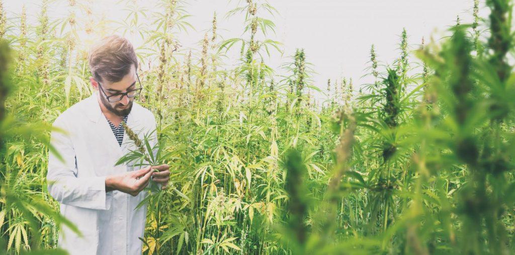 marihuana lecznicza właściwości